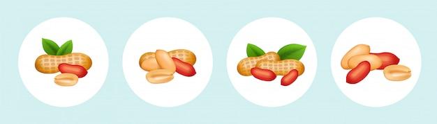 緑の葉と殻の豆のベクトルピーナッツセット