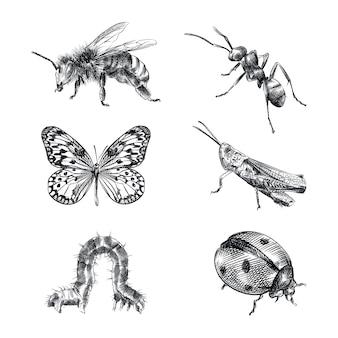 Рисованный эскиз набор насекомых. набор состоит из пчелы, осы, муравья, бабочки, кузнечика, гусеницы, божьей коровки