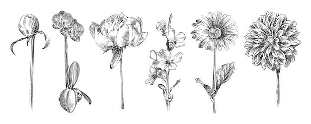 Рисованный эскиз цветов и растений. в набор входят сакура, пионы, орхидея, маленький бутон розы, ромашка, хризантема