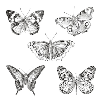 Эскиз набор рисованной бабочек. набор состоит из разных видов бабочек - черный ласточкин хвост, тигровые ласточкин хвост, капуста белая, апельсиновая сера, монарх, вице-король
