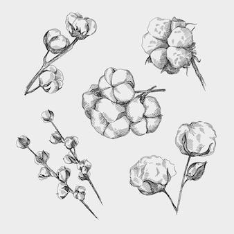 綿の手描きスケッチセット。綿棒。綿の茎。綿の枝。