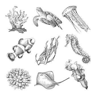 Набор рисованной эскиз морских животных и морских растений. в набор входят кораллы, черепаха, медуза, немо, водоросли, морской конек, скат