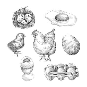 鶏肉製品の手描きスケッチ。セットは、巣の中の卵、トレイの中の卵、卵、ゆで卵、目玉焼き、スクランブルエッグ、チキン、ひよこで構成されています。
