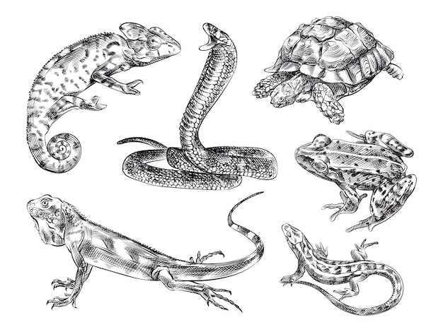 Рисованный эскиз набор рептилий. в набор входят ящерица, хамелеон, змея, черепаха, лягушка, игуана, монитор-ящерица, геккон.