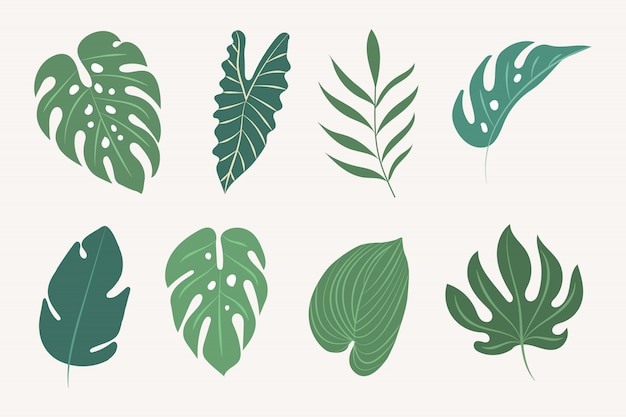 熱帯の葉をベクトルします。植物の要素