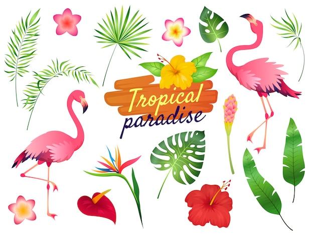 熱帯のフラミンゴのイラスト。