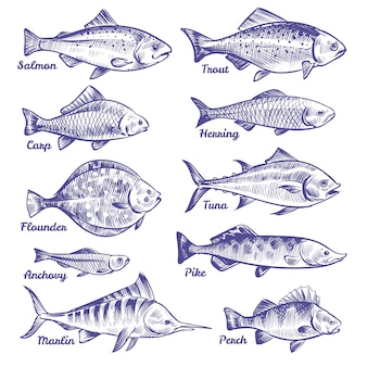 Ручной обращается рыбы. океан море река рыбы эскиз рыбалка морепродукты сельдь тунец лосось анчоус форель судак щука