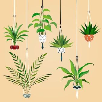 ハンギングハウスプラント。マクラメハンガーが付いている屋内植物。スカンジナビアのインテリア植栽セット