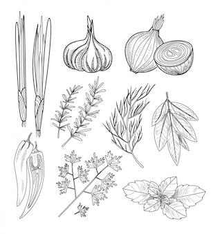 料理用のハーブとスパイス。ビンテージの図。