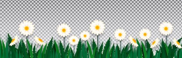 春の花が分離されました。明るく新鮮な花のボーダー。