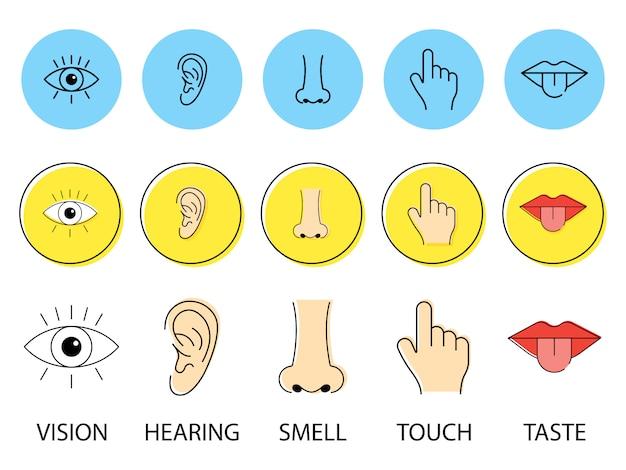 Набор из пяти человеческих чувств. зрение глаз, обоняние носа, слух слуха, прикосновение руки, вкус рта с языком. иллюстрации. простые иконки линии.