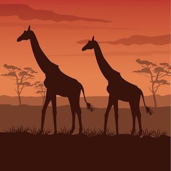 立っているシルエットのキリンと日没のアフリカの風景