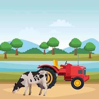 Корова и трактор