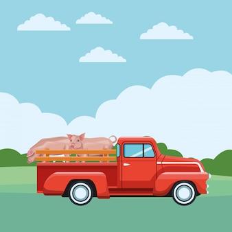 トラックと豚