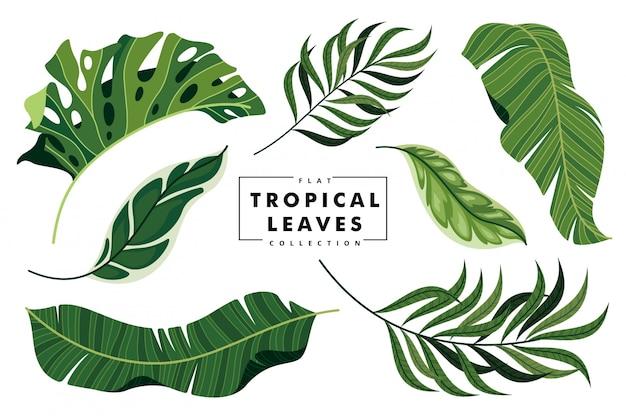 Коллекция тропических листьев