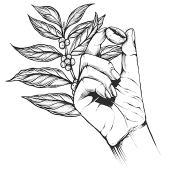 コーヒー豆の木の枝。ビンテージコーヒー刻まれたスタイル