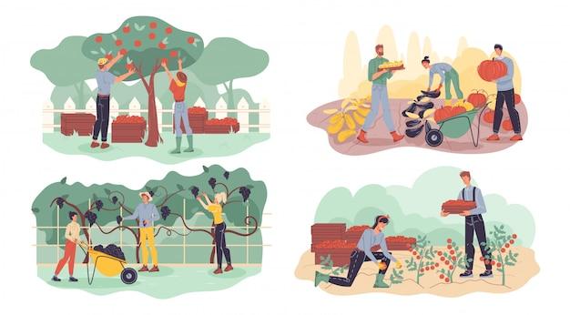 農家が果物、ベリー、野菜の収穫セットを収集