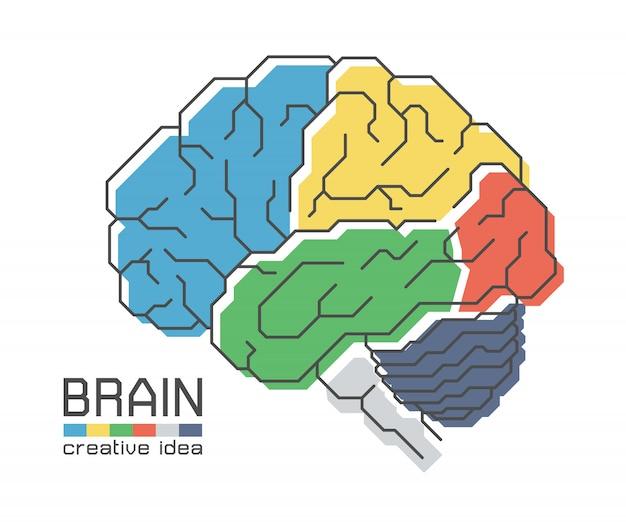 フラットカラーデザインとアウトラインストロークで脳の解剖学。独創的なアイデアのコンセプト
