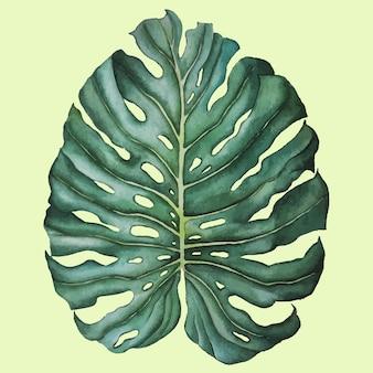 手描きの緑の熱帯モンステラを残す分離水彩イラスト