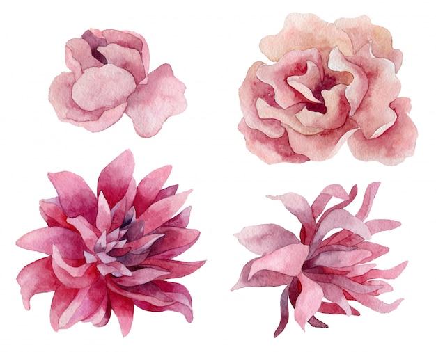 Цветущая магнолия, весенние цветы, иллюстрация.