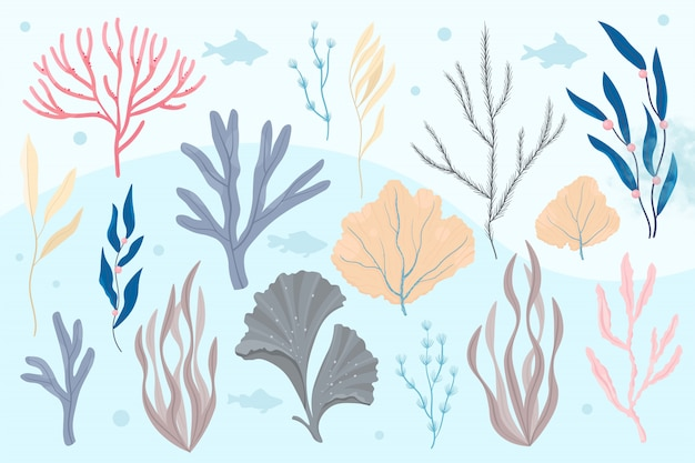 Морские растения и водные морские водоросли. водоросли набор векторные иллюстрации.