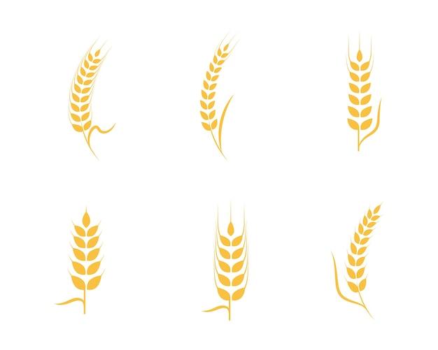 Шаблон логотипа сельскохозяйственной пшеницы