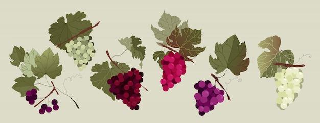 ブドウ枝セット。白と赤の手描き分離ブドウの枝のコレクションです。さまざまな種類のブドウ。ウェブと印刷用のモダンなイラスト入りデザイン。赤い夏の果実。ワイン作りのコンセプト。