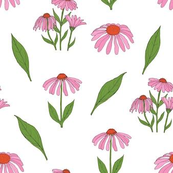 豪華なエキナセアの花、茎、白い背景の上の葉を持つエレガントな植物のシームレスなパターン。
