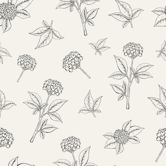 高麗人参の果実が白い背景の葉と茎で成長している素敵な植物のシームレスなパターン。