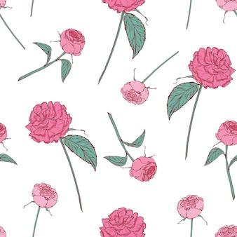 白い背景の美しいバラでエレガントな花柄シームレスパターン。