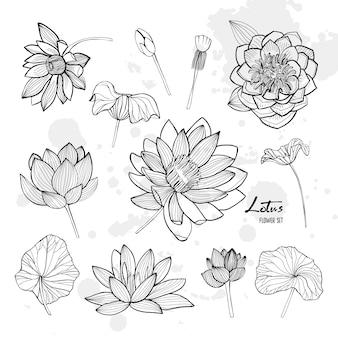 さまざまなビューで蓮の花のセット。咲き、芽と葉。手描きの輪郭イラスト集