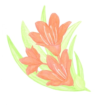 オレンジ色のユリの花と緑の葉の水彩画の小さな構成