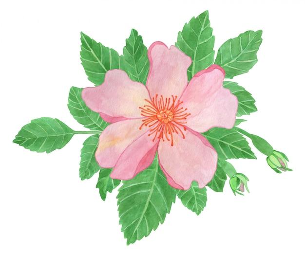 水彩イラスト、ピンクのバラの花と葉、ローズヒップアレンジメントクリップアート