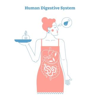 人間の消化器系の解剖学の概念