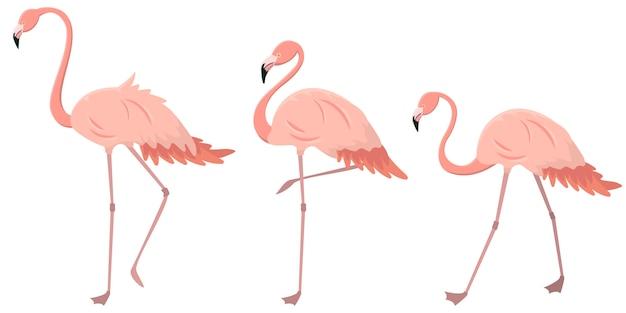 さまざまなポーズのフラミンゴのセット。漫画のスタイルのピンクの鳥。