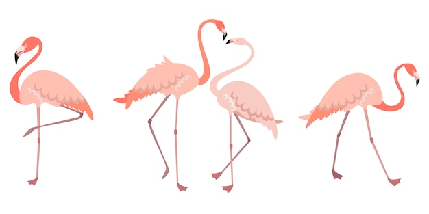さまざまなポーズのフラミンゴのセット。フラットスタイルの男性と女性のピンクの鳥。