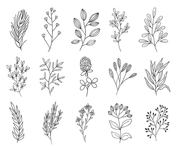 シンプルな花と枝。ラインアートハーブ。手描きのハイライトアイコンのセットです。