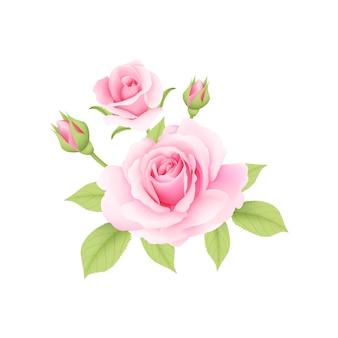 ピンクのバラのブーケベクトル