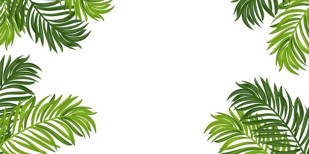 Тропические листья кадра. пальма лета тропическая на белой предпосылке с космосом для текста. летнее настроение, тропический фон пустым. вид сверху. иллюстрации.