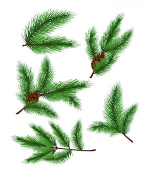Иллюстрация еловых веток. набор реалистичных сосновых и еловых ветвей, елки для украшения поздравительных открыток и приглашений на белом фоне.