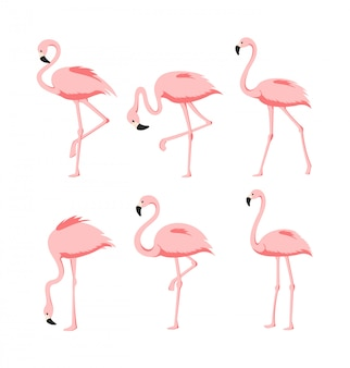 Набор красивых элегантных розовых фламинго в разных позах на белом фоне, экзотических тропических птиц для летней концепции в плоском мультяшном стиле.