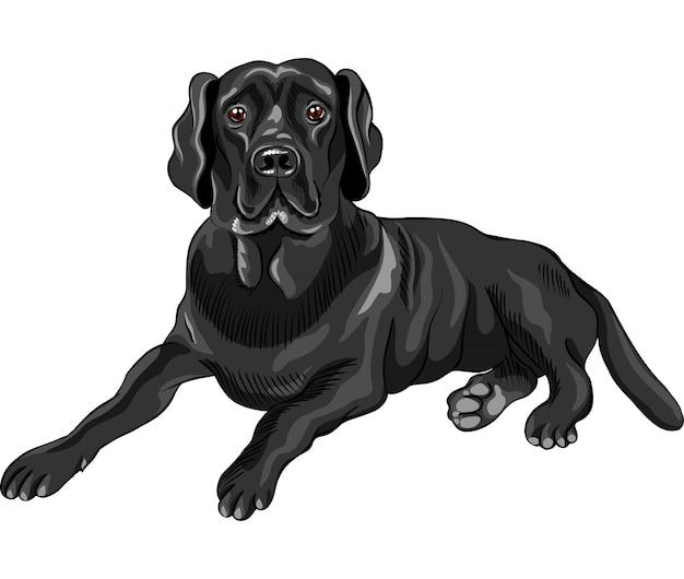 Эскиз собаки породы черный лабрадор ретривер