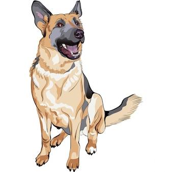 Цветной эскиз собаки породы немецкая овчарка