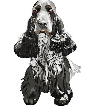 Охотничья собака английских кокер спаниелей сидя