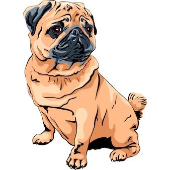 Милая собака породы мопс