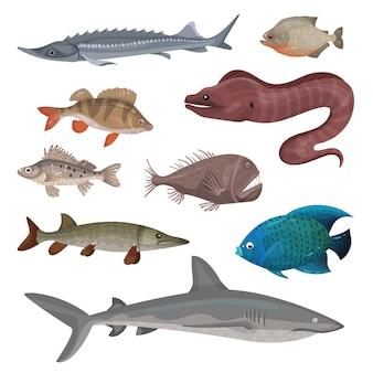 Множество разных хищных рыб. морские существа. тема жизни моря и океана