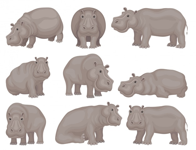 さまざまなアクションで大きな灰色のカバのセット。アフリカの動物。野生の生き物。野生生物のテーマ。設計