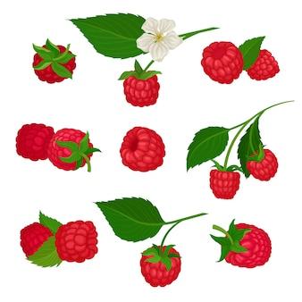 Набор иконок малины. вкусная летняя ягода. красочные иллюстрации на белом фоне