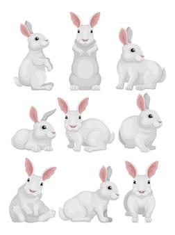 さまざまなポーズで白いウサギのセット。愛らしい哺乳類動物。耳が長くて尻尾が短いうさぎ