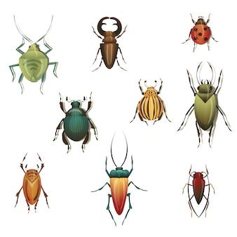 Коллекция разнообразных насекомых на белом фоне.